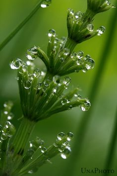 Morning Dew Bubbles   8x10 Fine Art Photograph by UnaPhoto on Etsy, $19.00