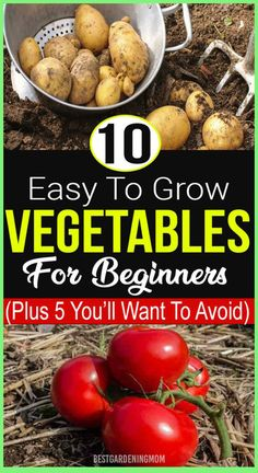 Growing your own vegetables in your garden is fun as well as scary when you don't know how to maintain it until harvesting. As a beginner you might thinking that it is quite difficult to grow vegetables. Vegetable Garden For Beginners, Gardening For Beginners, Gardening Tips, Container Gardening, Easy Vegetables To Grow, Fresh Vegetables, Veggies, Growing Onions, Growing Tomatoes