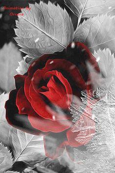 Гифки, Фиолетовые Розы, Роза Шарона, Лепестки Роз, Фиолетовые Тюльпаны, Декупаж, Красивые Цветы, Фотографии Подсолнечника, Розовые Цветы