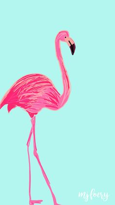 Flamingo Friday – Free Background