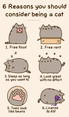 pusheen reminds me of fatty kitty LT at work . haha