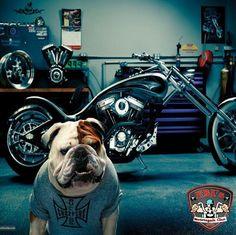 Good Morning bikers!
