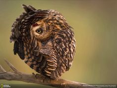 Wild Funny Owl Animals Wallpapers -  http://pic4wallpaper.blogspot.com/2014/06/wild-funny-owl-animals-wallpapers.html