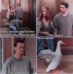 Friends - Funny Duck - Funny Duck meme - - Friends Funny Duck Funny Duck meme Thats a bad duck! The post Friends appeared first on Gag Dad. The post Friends appeared first on Gag Dad. Friends Tv Show, Friends Funny Moments, Tv: Friends, Friends Episodes, Friends Forever, Friends Series Quotes, Pivot Friends, Funny Friend Memes, Funny Memes