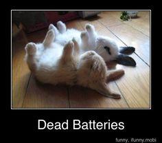 Awww...cute bunnies!