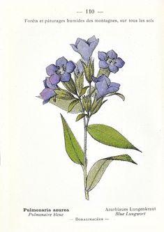 Vintage Botanical Prints, Botanical Drawings, Botanical Art, Vintage Prints, Vintage Art, Botanical Flowers, Illustration Botanique Vintage, Botanical Illustration, Impressions Botaniques