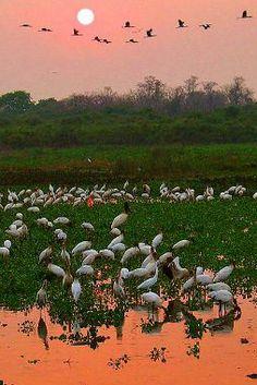O site Wikiparques foi criado para qualquer pessoa que tenha conhecimento sobre parques e ideias para preservá-los . O conteúdo é interativo. Há informações detalhadas sobre o Cerrado, Pantanal, Amazônia, Caatinga e outros Biomas que podem ser entendidos