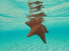 Starfish Swim in Great Exuma, Bahamas #ocean