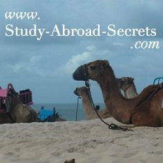 Study Abroad Advice and Information for Exchange Students, by an Exchange student