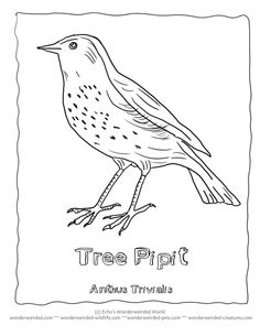 Kostenlos zum Ausdrucken, Zum Drucken Vogel karten zum