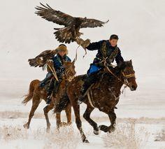 hunting Golden eagles