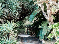 Le jardin botanique de Lisbonne dans le petit quartier de Principe Real