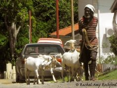 Goat herder in Scarborough Tobago, photographed by Rachel Amy Rochford
