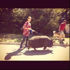 Walking the dog, Noordhoek style. Dog Walking, Cape, Horses, Dogs, Animals, Style, Mantle, Animales, Swag