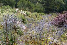Geniesser-Garten : naturnahe Blumenbeete - Sommerblueher