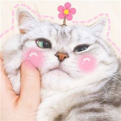 Are you cat lovers? What kind of cats do you know? Of course, they are a pretty, adorable, and cute animal! Cute Cat Memes, Cute Love Memes, Funny Cats, Funny Animals, Cute Animals, Funny Memes, Cute Cats And Kittens, Kittens Cutest, I Love Cats