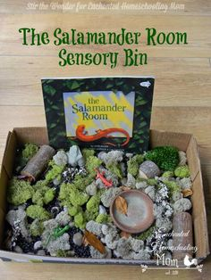 The Salamander Room Sensory Bin | Stir the Wonder for Enchanted Homeschooling Mom #sensory #bookinspired