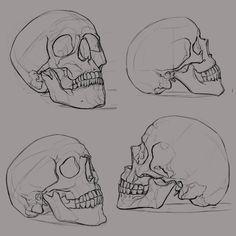 Fantastic Photographs skull drawing sketches Suggestions What's the serious difference between attracting in addition to sketching? To help response to this kind of conundrum Skull Reference, Drawing Reference, Reference Images, Anatomy Reference, Design Reference, Anatomy Art, Anatomy Drawing, Skull Anatomy, Drawing Tutorials