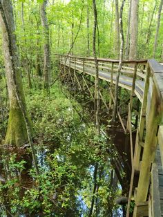 Congaree National Park travel tips from a park ranger. Entrance fees, visitor center, camping, hiking and all the things you need to know to plan a visit to Congaree NP