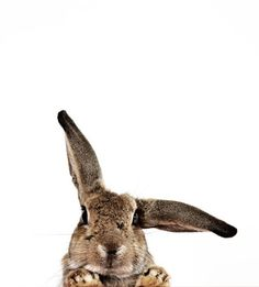 I'm all ears......