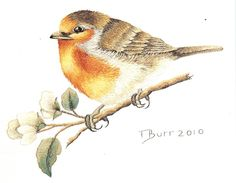 European Robin by Trish Burr, South Africa, found in embroidery magazine - Inspirations