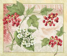 Lang Wallpaper/Desktop | December 2015 | Fresh Picked