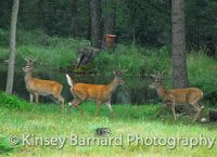 Molly Montana's Good Stories & Photos Blog: Whitetail Deer