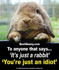 Funny Animal Pictures, Funny Animals, Cute Animals, Cute Pictures, Rabbit Pictures, Pet Bunny Rabbits, Pet Rabbit, Cute Baby Bunnies, Funny Bunnies