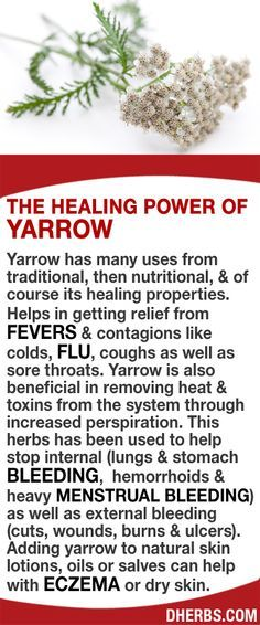 Yarrow has many uses. Helps in getting relief from fevers & contagions like colds, flu, coughs as well as sore throats. Yarrow is also beneficial in removing heat & toxins from the system through increased perspiration. Help stop internal (lungs & stomach bleeding, hemorrhoids & heavy menstrual bleeding) as well as external bleeding (cuts, wounds, burns & ulcers). Adding yarrow to natural skin lotions, oils or salves can help with eczema or dry skin. #dherbs #healthtips Struggling with…