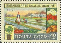◇Agriculture in USSR  1954