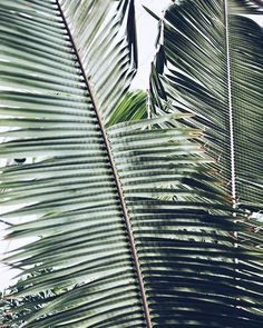 tropical plants + nature + garden | Julie de la Playa