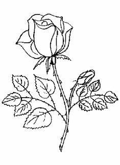 12 Mejores Imagenes De Pimpollos De Rosas Rojas Rosas Rojas