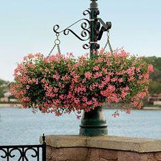 84 Creative Container Gardens | Cascading Geraniums | SouthernLiving.com
