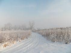 Take a Winter Walk!