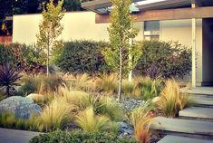 7 Ways to Create a Waterwise Garden
