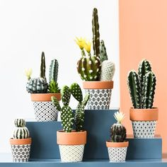 34 Classy Small Cactus Ideas For Interior Decorations - Cacti are the best types of indoor or outdoor plants. Cactus grows properly without too much attention and care from you. It is among the draught-resi. Suculentas Diy, Cactus Y Suculentas, Painted Plant Pots, Painted Flower Pots, Cactus Decor, Plant Decor, Cactus Cactus, Fake Cactus, Succulent Pots