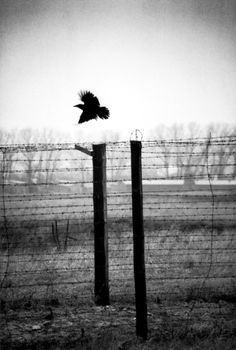 Erich Hartmann Poland, Lublin. 1994. The barbed wire fencing at the Majdanek concentration camp.