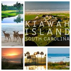 kiawah island, south carolina vacation - watch the dolphins!