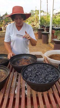Sugestão de SilMez  Substrato, faça o seu! Alimente suas plantas! Fonte : Rosa do Deserto