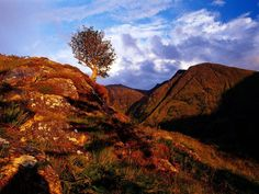 Sunset Over Glencoe, The Highlands, Scotland - glencoe wood scotland - Google Search