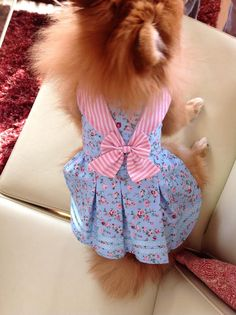 Trixie modeling a creation made from Sofi & Friends Pattern 1623 Ships Ahoy Dog Dress