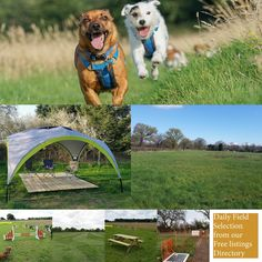 Paddocks For Paws Staffordshire Moorlands Apesford Farm House Bradnop Near L Paddocks For Paws Staffordshire Moorland In 2020 Dog Kennel Kennel Staffordshire