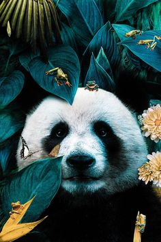 Illustrations Discover Animals And Pets Cute Animals Panda Wallpapers Panda Love Panda Bear Tier Fotos Animal Wallpaper Art Design Illustrations And Posters Most Beautiful Animals, Majestic Animals, Beautiful Creatures, Lion Wallpaper, Animal Wallpaper, Panda Wallpapers, Cute Wallpapers, Nature Animals, Animals And Pets