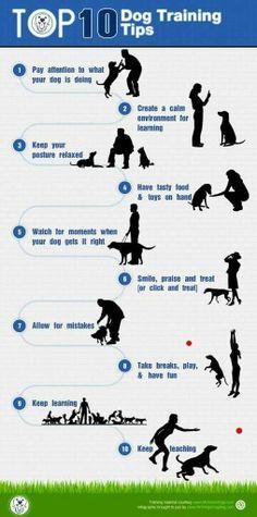 10 regels voor hondentraining