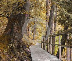 Golden autumn in the Alps. Austria