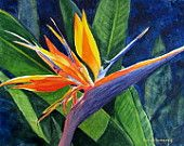 Bird of Paradise, Barbara Rosenzweig Flower Art Print, Etsy, Floral Reproduction of Original Watercolor Painting,Tropical Exotic