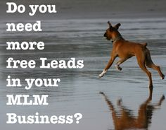 Do you need Leads for your MLM Business?