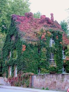 Ivy Covered Cottage with pink roof i know this is exterior but this is amazing. Cozy Cottage, Cottage Homes, Cottage Style, Beautiful World, Beautiful Homes, Beautiful Places, Foto Nature, Deco Champetre, Cabins And Cottages
