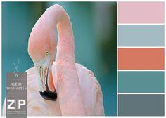 Flamingo Kleurinspiratie!