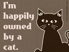 I am happily owned by a cat. #cat #humor